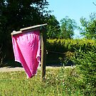 Huge Pink Polka-Dot Panties flappin' in the wind  by RLHall