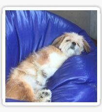 Elvis the Dog - Asleep at Work Sticker