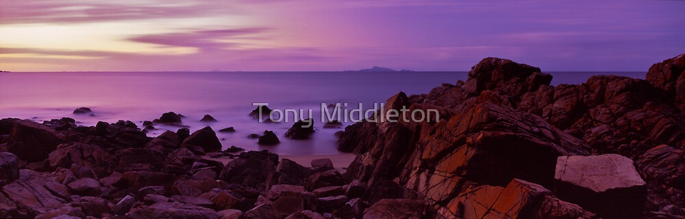 Dolphin heads - NQ by Tony Middleton