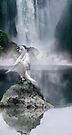 Swan Song by Varinia   - Globalphotos