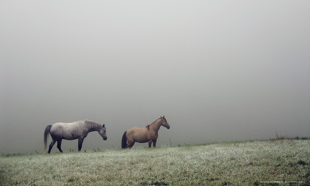 Frozen Pastures by Andreas Stridsberg