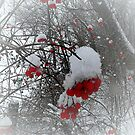 The snowflakes glisten on the tree..The sun no longer sets me free.. I feel there's no place freezing me..Let me feel the frost of dawn..Fill my dreams with flakes of snow..   by jammingene