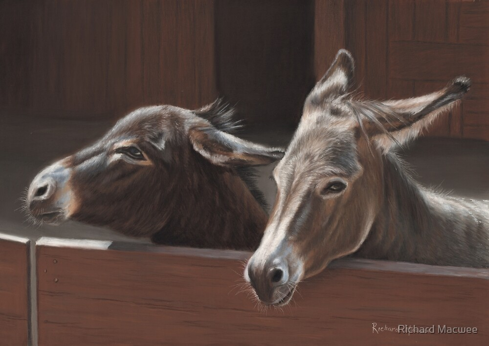 Donkeys by Richard Macwee