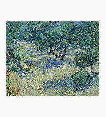 Olive Grove by Vincent Van Gogh Photographic Print