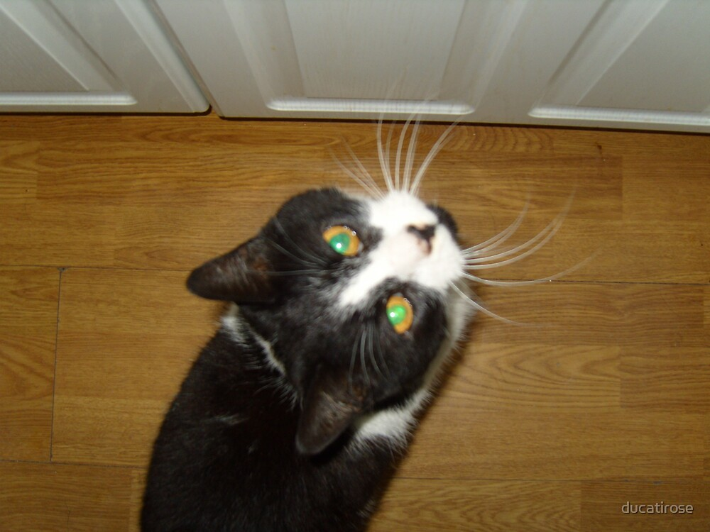"""Chrissie """"can't you see I'm starving mummy"""" by ducatirose"""