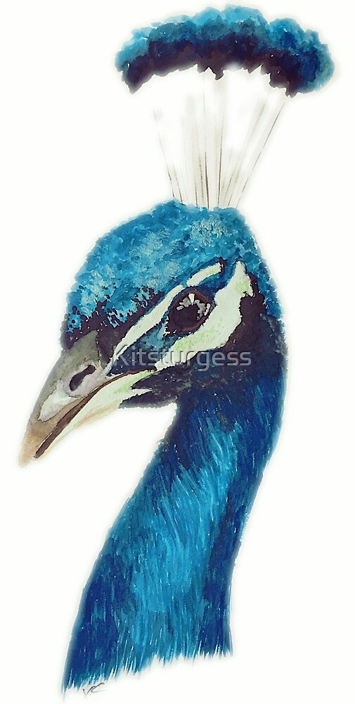 Watercolour Peacock by Kitsturgess