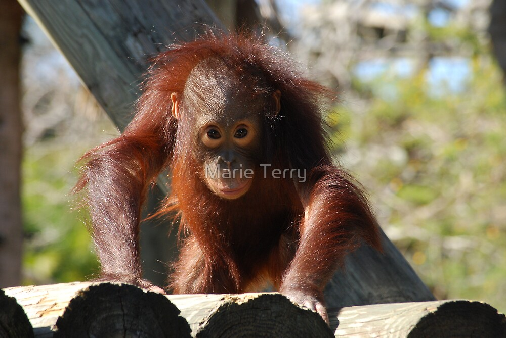 Curious Baby by Marie Terry