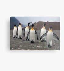 King Penguins on Parade Metal Print