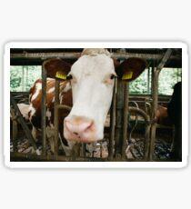 Dutch Cow Sticker