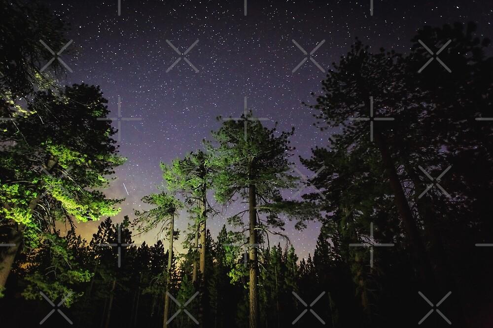 Quiet night in a pine forest by Victoria Avvacumova