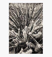 Yucca & Cactus No. 2 Photographic Print