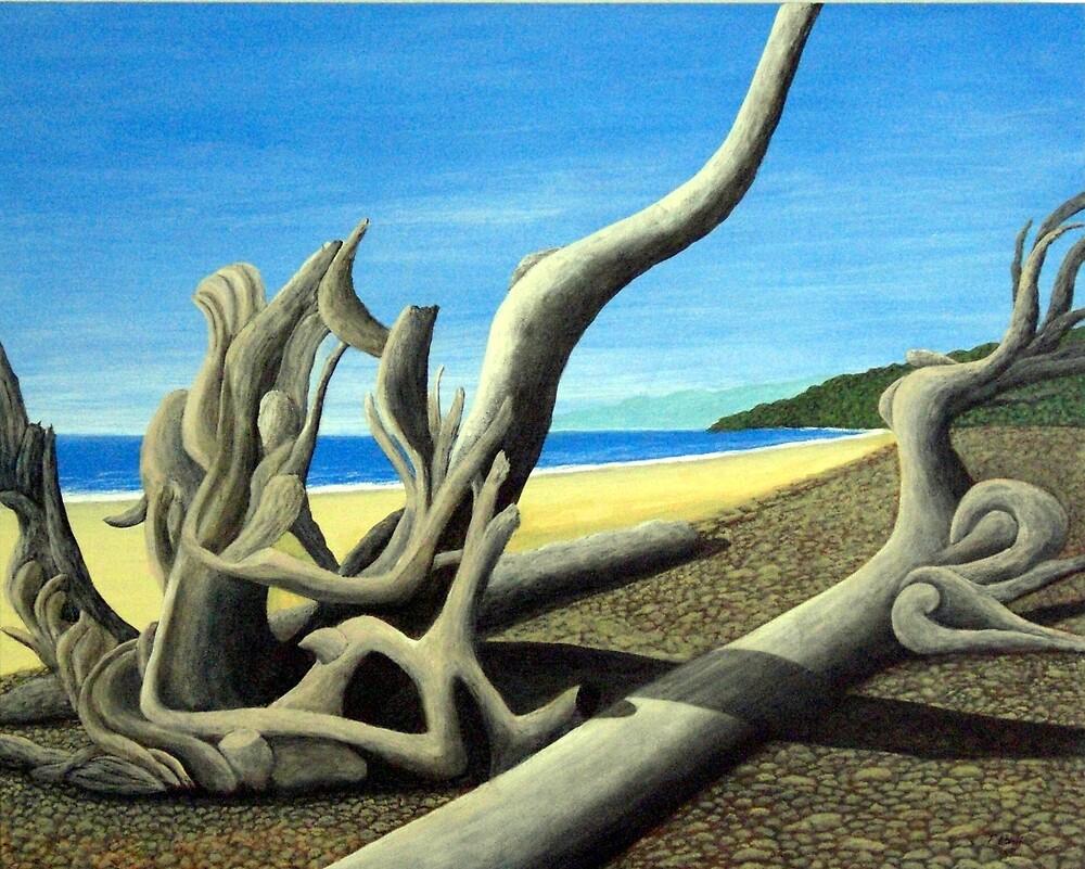 Driftwood by fbkohli