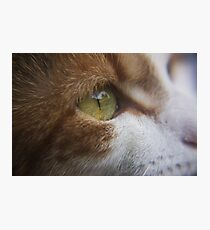Photograph of a Cat's Eye Photographic Print