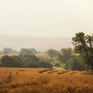 Harvest by Chris Charlesworth