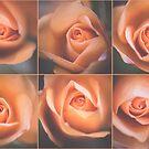 Blasse Rosen von Victoria Avvacumova
