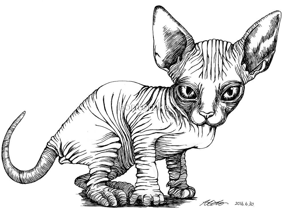 Sphynx cat by bonteruko