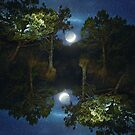 Moonset in coniferous forest by Victoria Avvacumova