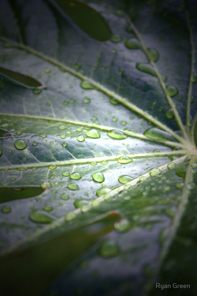 Droplet by Ryan Green
