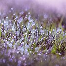 Morning dew on grass by Victoria Avvacumova