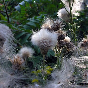 FLUFF by KevinKelly