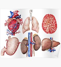 Watercolor anatomy collection Poster