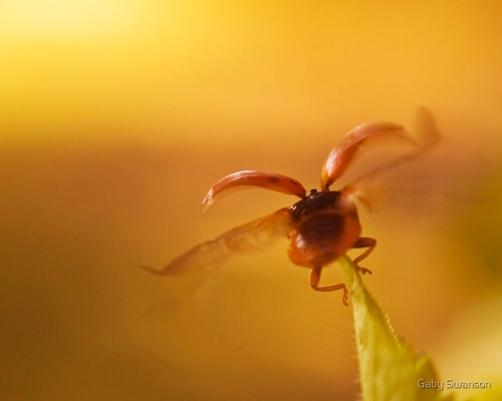 Fly into the sunset by Gabriele Swanson