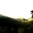 Jurassic Park  by cjcphotography