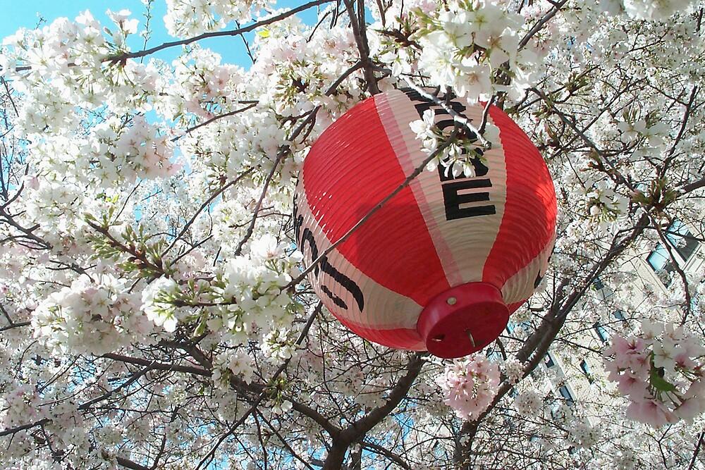 Lantern in Yoshino Tree by Glenn Grossman