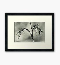 Tulip Poplar Empty Seed Heads - Black and White Framed Print