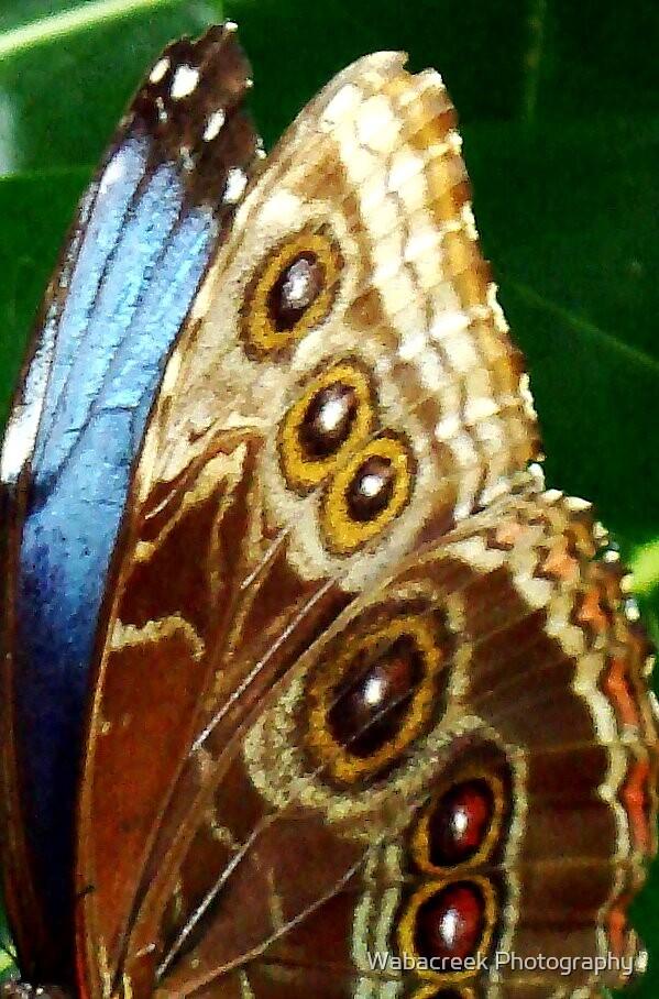 Butterfly wings by Jocelyne Phillips