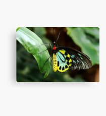Colourful Butterfly Canvas Print