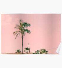 Pink Sky and Palm Trees  Poster