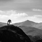 Strathfarrar - Majestic Calling by Kevin Skinner