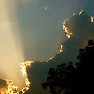 Cumulus by Alexander Greenwood