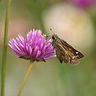 Skipper butterfly!!! by Poete100