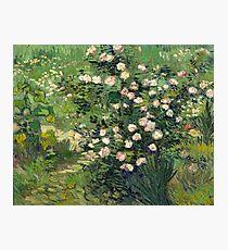 Vincent van Gogh - Roses, 1889  Photographic Print