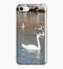A family of white swans swimming in a pond iPhone Case/Skin