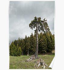 View from Bucegi mountains, Romania, Bucegi National Park Poster