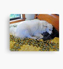 Sleeping Sylvie The Wonder Dog...on Mom's Bed! Canvas Print