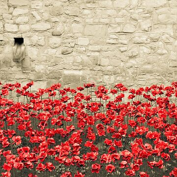 Tower Poppies 02A by vanroy