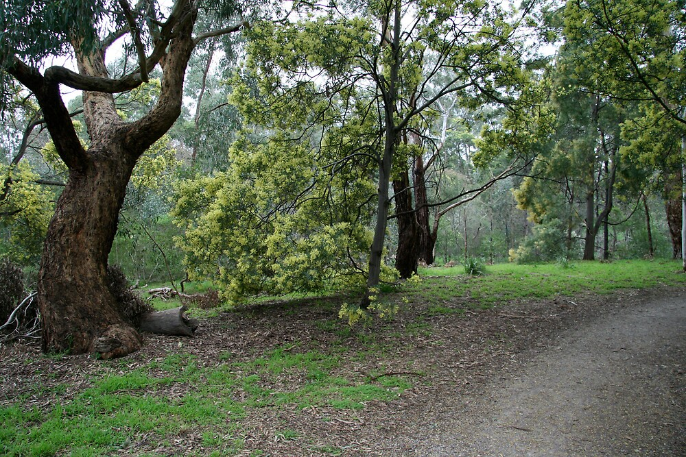 creeklands walk by jayview
