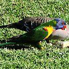 Birds Feeding by Rodney Wratten