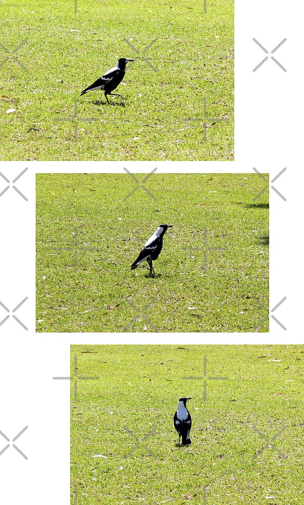 Running Magpie by Sandra Chung
