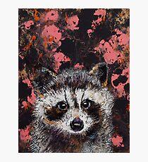 Baby Raccoon Photographic Print