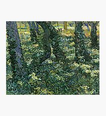 Vincent van Gogh - Undergrowth, 1889  Photographic Print