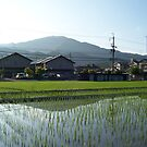 spring in iwakura by moyou
