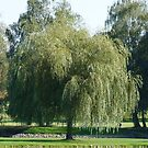WILLOW - WEEP FOR ME! by Marilyn Grimble