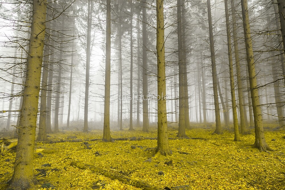Mystic forest with fog and yellow foliage by wsfbubble