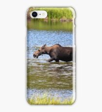 Winterpark Moose {4790} iPhone Case/Skin