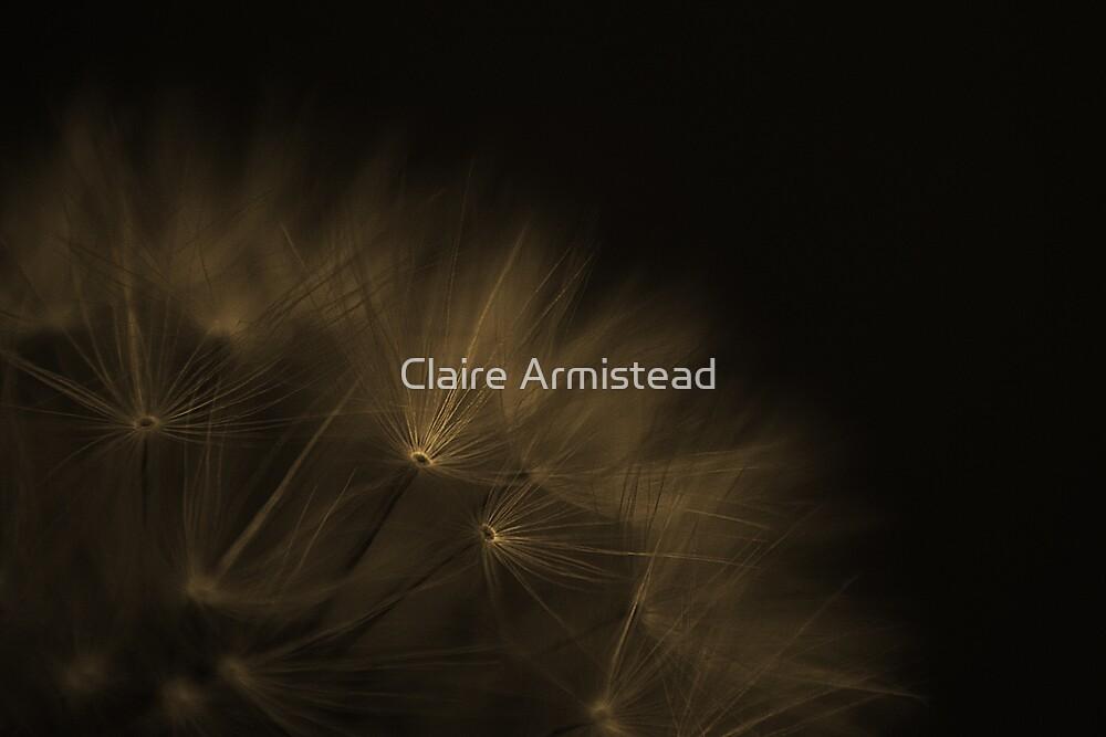 Taraxacum officinale by Claire Armistead